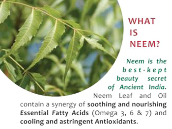 Boil Neem Leaves in Water for Clean and White Teeth